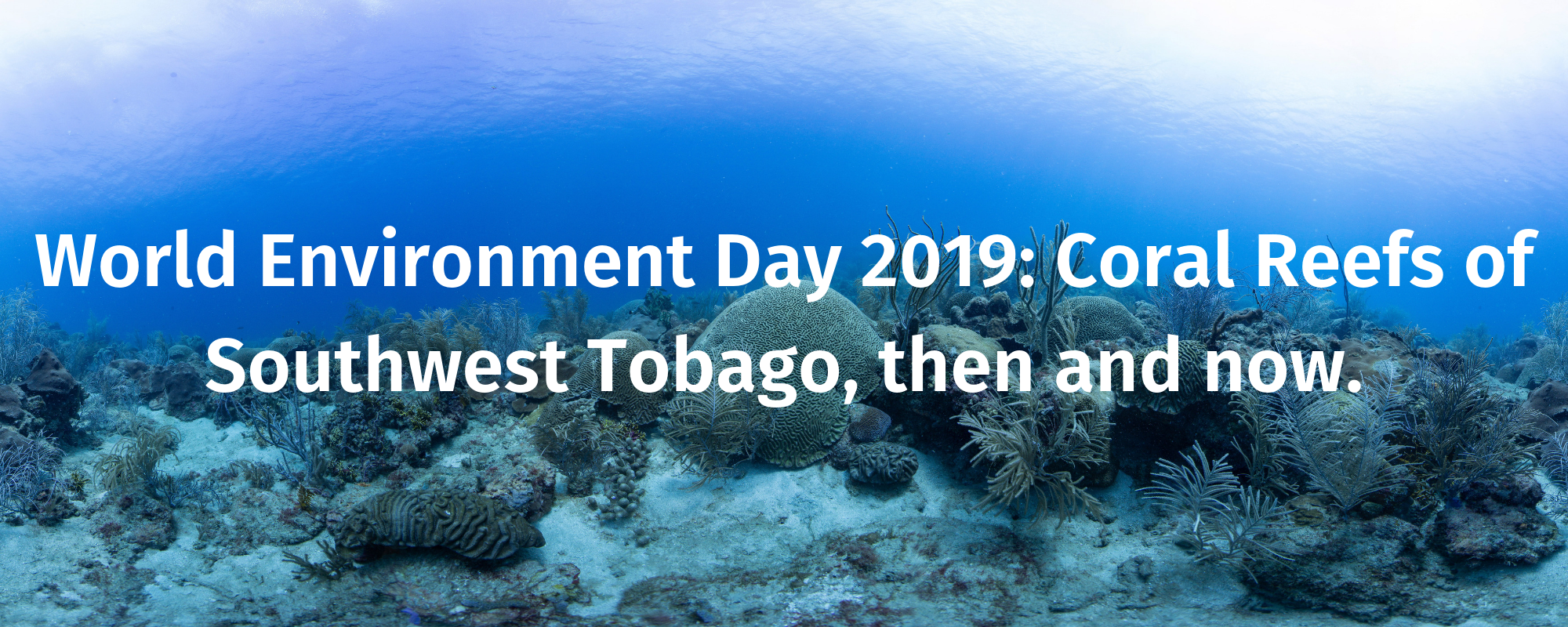 World Environment Day 2019:  Coral Reefs of Southwest Tobago, then and now.
