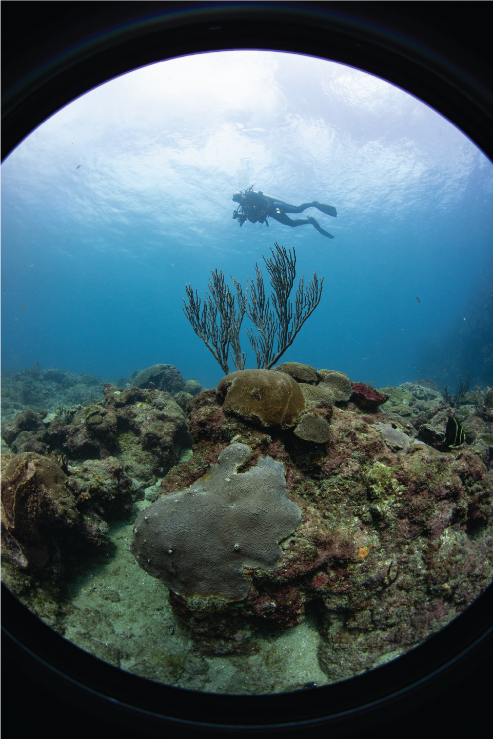 Coral Reefs: Why do they matter?